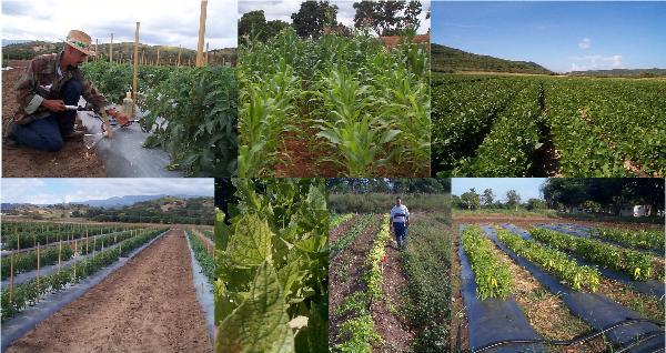 Ref: RDNL20160704001 - Búsqueda de socios para analizar las condiciones socio-económicas en la convocatoria SFS-8-2017 (H2020): insumos ecológicos - insumos contenciosos en agricultura ecológica