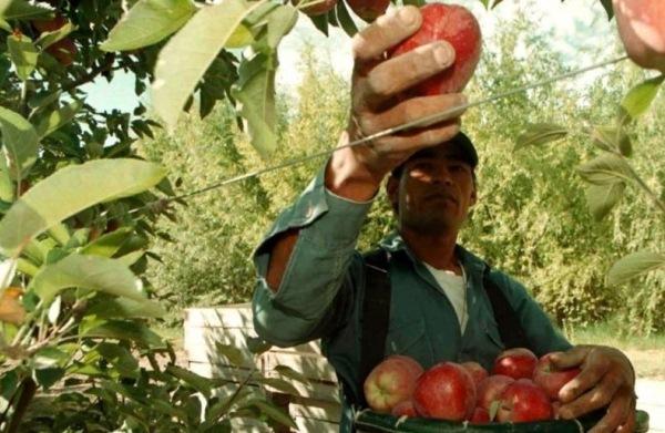 Ref.TRBG20141125001 -Tecnología de producción de chips de manzana