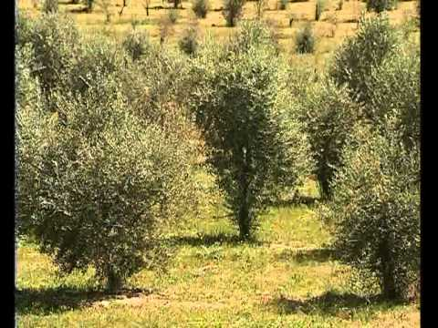 Ref. RDGR20150121003 - H2020: Nuevas estrategias ambientales y productos basados en tecnologías verdes sobre vides y olivos