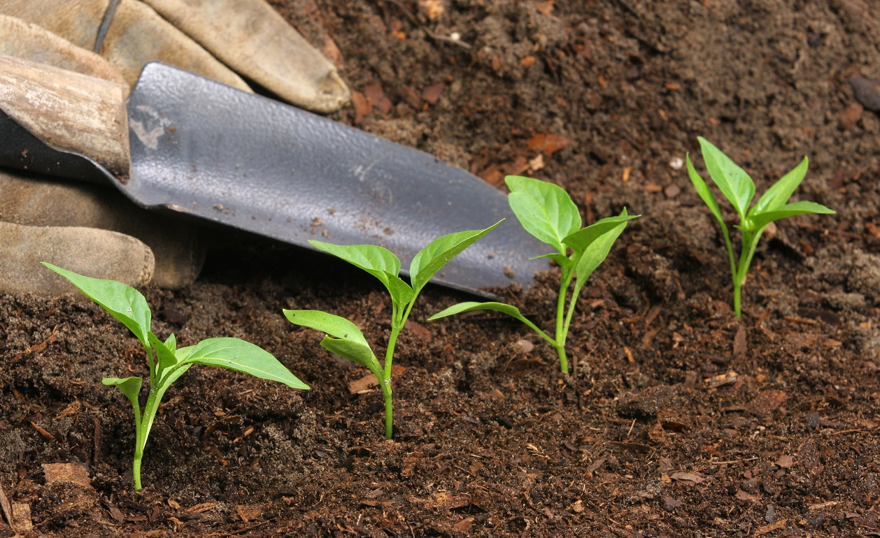 fertilizantes-organicos