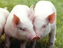 Ref. TRUK20150226001 Búsqueda de vacunas para ganado y tecnologías de vacunación para el mercado chino