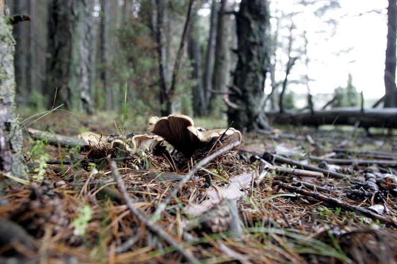 forestal setas