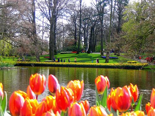 Ref. BONL20150123001 Servicios de asistencia para empresas extranjeras en Holanda