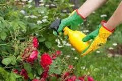 Ref. BRRO20160719001 Importador rumano de raticidas, insecticidas, repelentes y fertilizantes se ofrece como distribuidor de nuevos productos