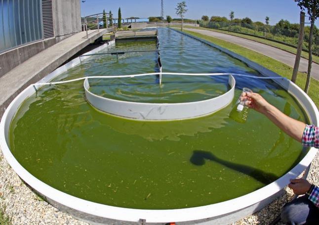 Ref: RDIT20160624001 - Búsqueda de centros de investigación y empresas para explotar biomasa de algas y acuática y producir moléculas para productos farmacéuticos, nutracéuticos y aditivos alimentarios