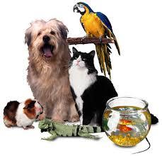 Ref. BRSE20180117001 Distribuidor sueco busca productos orgánicos/ecológicos para mascotas con el fin de lanzarlos al mercado sueco