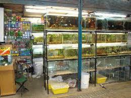 Ref. BRNL20180420001 Empresa holandesa busca proveedores de productos para acuarios