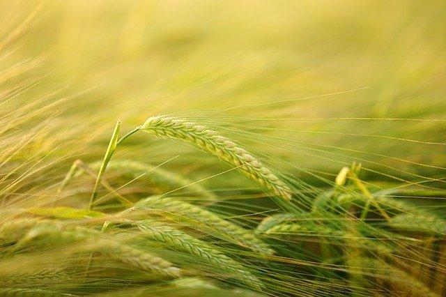Convocatoria de propuestas 2021: Subvenciones a programas SIMPLES de promoción relativos a productos agrícolas ejecutados en el mercado interior y en terceros países con el fin de restablecer la situación del mercado de conformidad con el Reglamento (UE) n.0 1144/2014