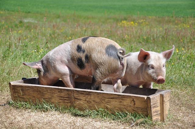 Ref. TOUA20210422001 Empresa ucraniana ofrece equipos para la transformación sostenible de residuos alimentarios en piensos mixtos para el engorde de cerdos bajo acuerdo comercial con asistencia técnica