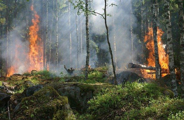 Ref. TOIT20210607002 Compañía italiana busca probadores piloto para un sistema de apoyo a la toma de decisiones en el control y la gestión de incendios forestales